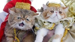 Des chats betes